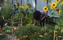 'Sale in Zucca': Progetto didattico e botanico